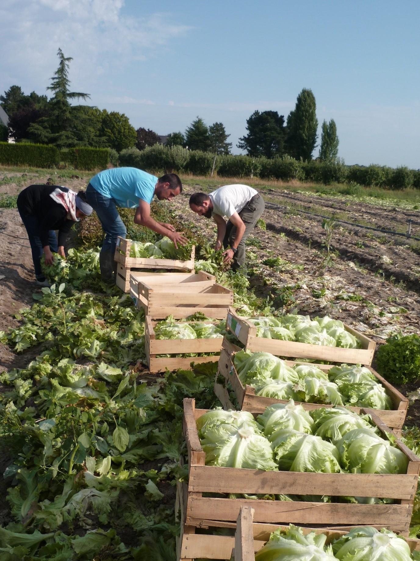 L'association SOLAAL Pays de la Loire est membre du réseau national SOLAAL : SOLidarité des producteurs Agricoles et des filières Alimentaires. Ce réseau est né du constat que d'un côté les agriculteurs avaient parfois des invendus qu'ils ne parvenaient pas à valoriser et que de l'autre, les associations d'aide alimentaire manquaient de produits frais.